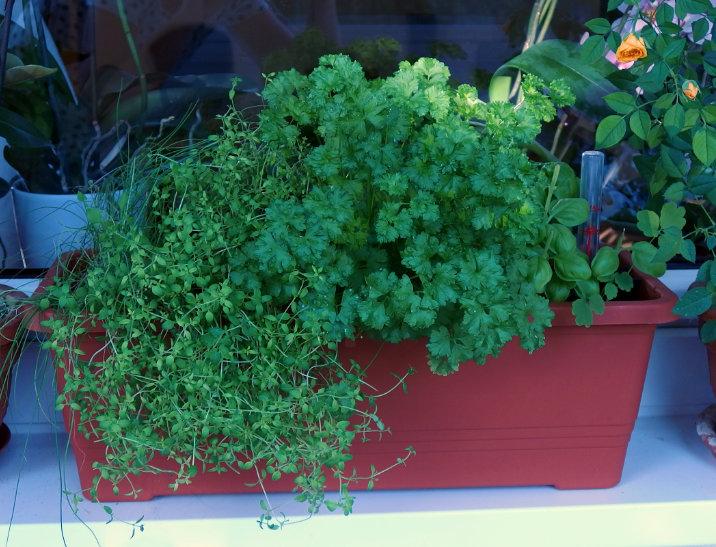 bylinky zahrada